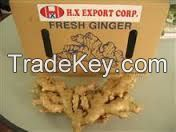 Fresh Ginger NEW SEASON IN VIET NAM