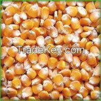 Yellow Corn Feed Grade Origin Vietnam