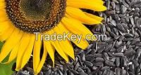 Sunflower seeds for human