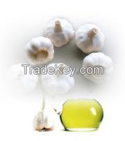 The fctory Natural Pure Garlic oil for Health Care