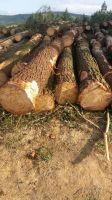 Southern Yellow Pine Logs (taeda and elliottii)