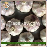 2015 New Crop Fresh Garlic packed in cartons