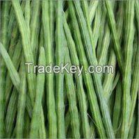 Moringa Seeds, Powder supply from India
