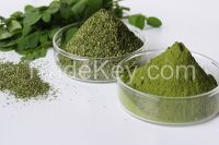 Moringa Seeds, Powder supply from India
