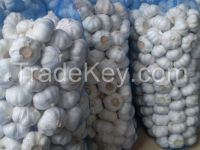 Fresh IQF Frozen Garlic (Cultivation Organic, Frozen Snow and Fresh)