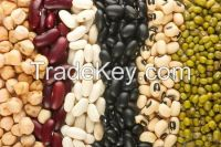 High Quality Pinto Dried Red Kidney Beans With Low Price