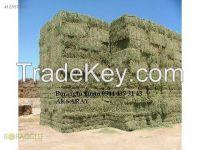 alfalfa hay from turkey