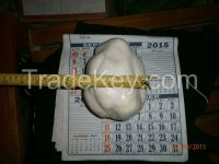 GIANT NATURAL PEARL FROM