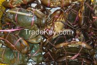 mud crab , fresh lobster , shrimp , grouper fish