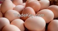 Farm Fresh Chicken/Table Eggs
