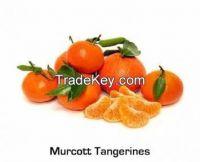 Tangerine Murcott Variety
