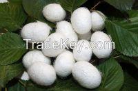 Silk Cocoon