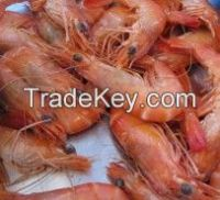 tunisian shrimps