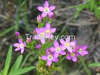 Centaury Oil Natural Herbal Oil