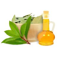 Natural Laurel Leaf Oil (Daphne Oil) Bulk Wholesale GMP Certified