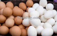 Chicken Eggs White and Brown