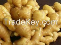 Fresh Ginger fr sale
