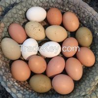 Fresh Table Egg and Egg products | Egg Supplier
