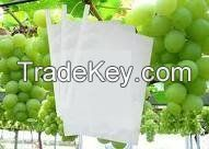 Grape Growing Paper Bag, Grape Protection Paper Bag, Grape Packaging Paper, Paper for Fruit Growing Use