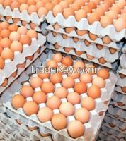 Fresh Farm Chicken White and Yellow  Eggs