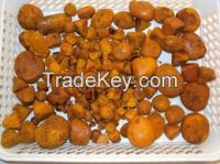 Ox Gallstones | Cattle