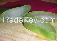 Vietnam Fresh Aloe Vera Fruit/Juice