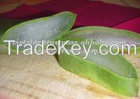Vietnam Fresh Aloe Vera