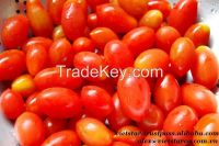 fresh green/red tomato wholesale price