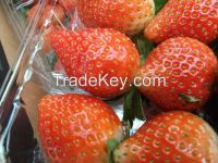 Egyptian Fresh Strawberry for sale