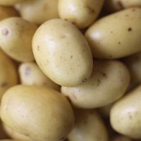 Super Quality Melody Potatoes For Export