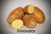 Super Quality Innovator Potatoes For Export