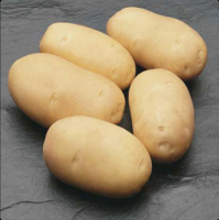 High Quality Fresh Challenger Potatoes For Export