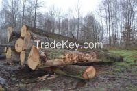 Solid wood flooring - Baltic Oak 20mm