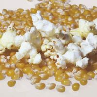 Cheap Price Popcorn Seed