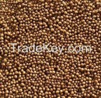 CORIANDER from Ukraine