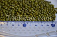 GREEN MUNG BEAN(from Argentina)