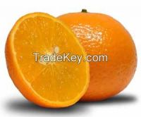 Mandarins kinnow mandrin mandarin mandrin
