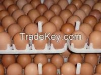 Fresh White Brown Table Eggs /Fresh Chicken Table Eggs & Fertilized Hatch