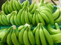 Green Cavendish Bananas, Cavendish Bananas Seeds for Sale