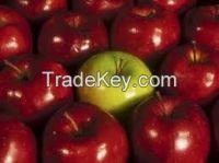 Fresh apple for new season for sale