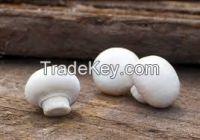 Fresh And White Frozen Mushroom
