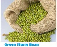 Selling Fresh Natural Green Mung Bean
