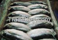 Frozen Sardine Fish and Frozen Mackerel Fish