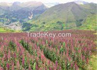 High Quality Quinoa