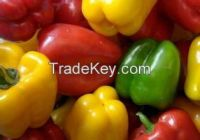 High quality fresh capsicum-Bell pepper