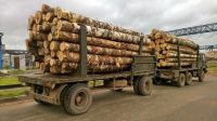 BIRCH LOGS / BIRCH PLYWOOD LOGS
