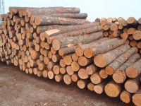 SPRUCE TIMBERS (LAT. PICEA) (WHITE WOOD) (SOFTWOOD)