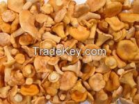 Sell Russia frozen IQF chanterelle