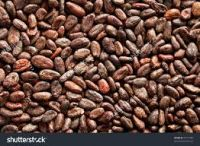 Grade A High Quality Raw Cocoa Beans