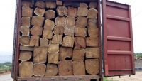 KOSSO WOOD | High Quality Kosso Tree Wood from Nigeria